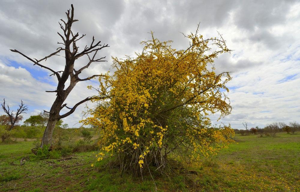 Ntsiri- Moping Pomegranates at private game reserve