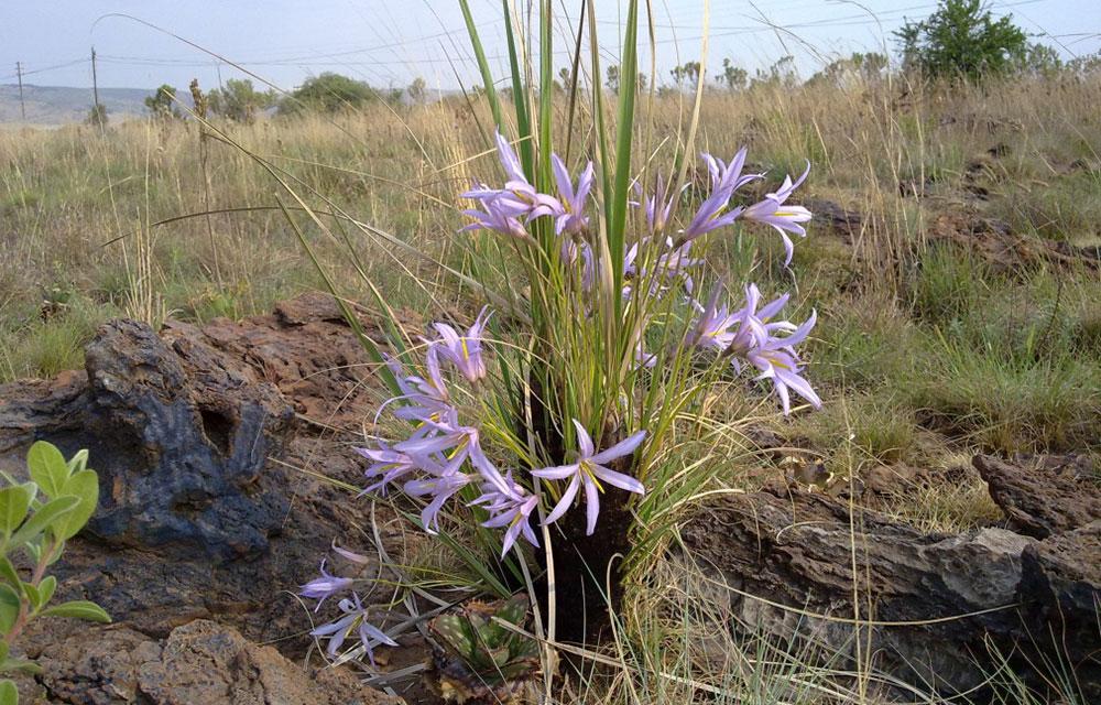 Ntsiri Private Game Reserve - indigenous plants