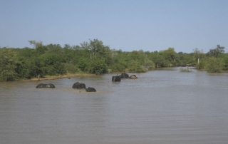 elephants wading through water at Ntsiri Nature Reserve