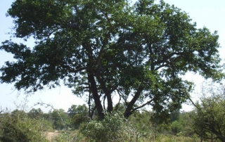 Ntsiri Nature reserve