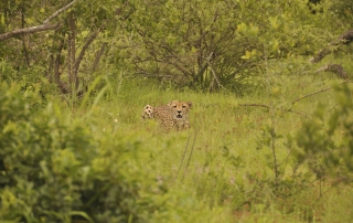 leopard spotted in a clearing at Ntsiri Private Nature Reserve