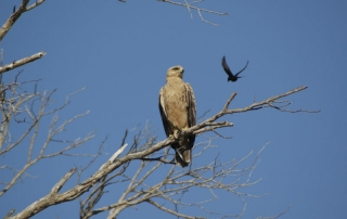 high angle shot of a bird of prey at Ntsiri Private Nature Reserve