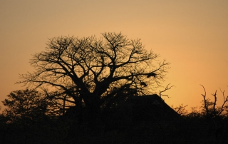 Beautiful African sunset at Ntsiri Private Nature Reserve