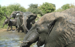 Close up of elephants at watering hole