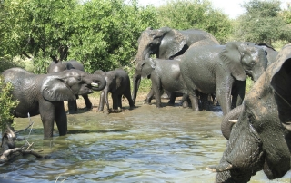 Elephants bathing at Ntsiri Private Nature Reserve
