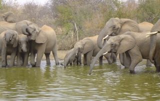 elephants in water at private nature reserve