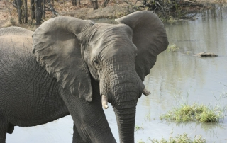 elephant and water hole at Ntsiri Private Game Reserve