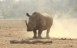 Rhino spotted at Ntsiri Private Game Reserve
